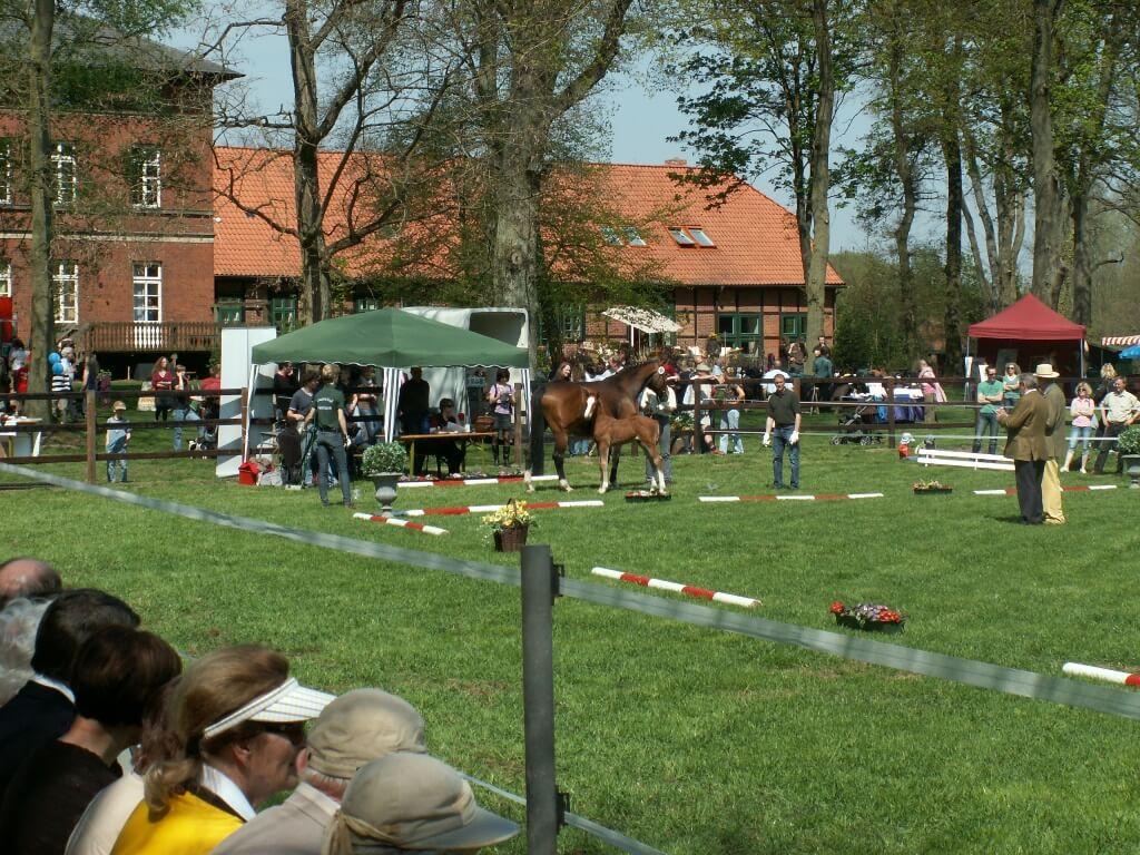 26. Fohlenschau - Klosterhof Medingen - 01. Mai 2012