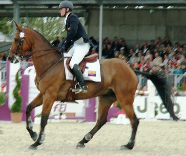 CCI4* Luhmühlen 2012 - Nicolas Wettstein (ECU) auf seinem Pferd Nadeville Merze