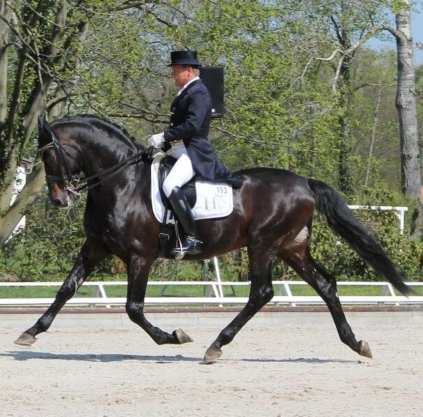 Rainer Schwiebert mit seinem Pferd Helenenhof's Carabas beim Pferdefestival Redefin 2013