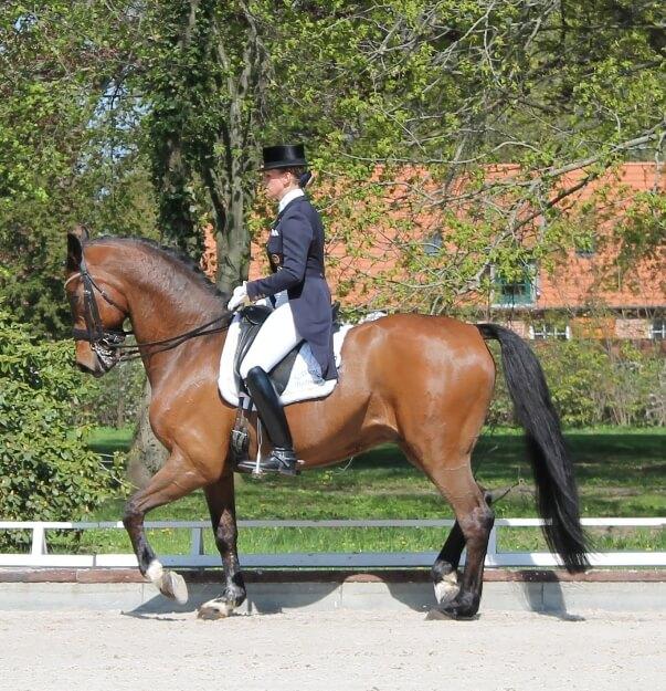 Theresa Wahler mit ihrem Pferd Du Commerce beim Pferdefestival Redefin 2013